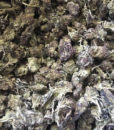 Hempy-cannabis-0