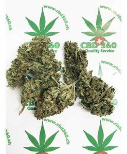 Bio Haze Cannabis legale