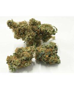 Flor de cannabis CBD Mango Haze