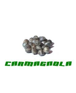 Семена конопли каннабиса