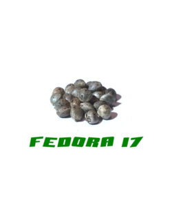 Graines de chanvre de qualité Fedora