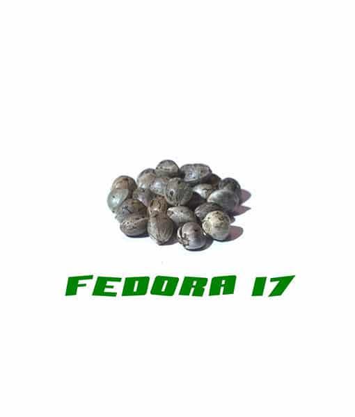 Hanfsamen der Fedora-Qualität