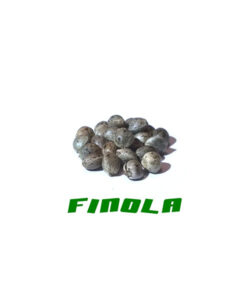 Hemp seeds of Finola quality