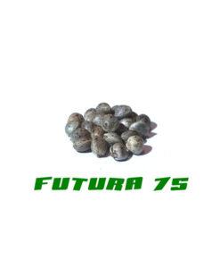 Graines de cannabis de la qualité Futura 75
