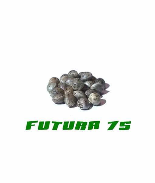 Семена конопли качества Futura 75